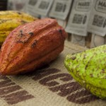 IMG_9779-cacaobonen