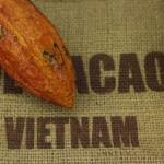 IMG_9875-cacao vietnam